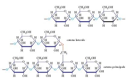 Enzimi: molecole chiave nell'ammostamento