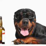 Dog-beer & pub dog-friendly: un viaggio tra i locali birrari a quattro zampe!