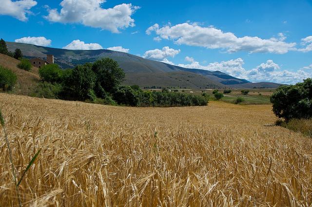 Le virtù dell'orzo: il miglior cereale per produrre la birra