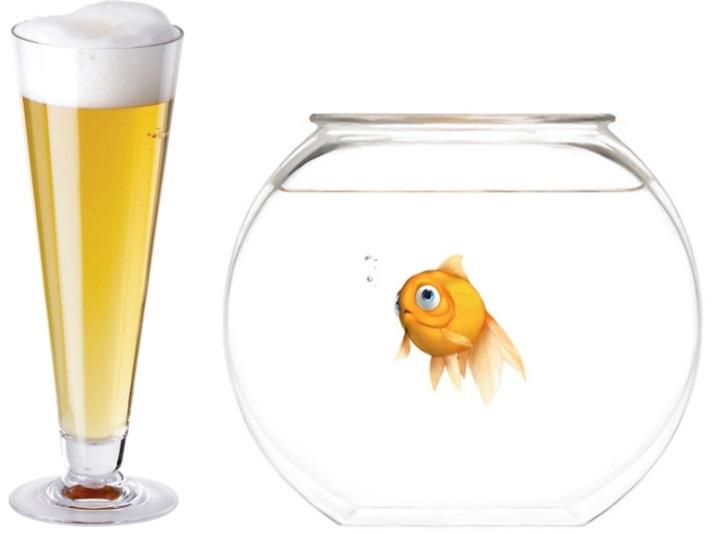 Ad ogni pesce la sua birra!