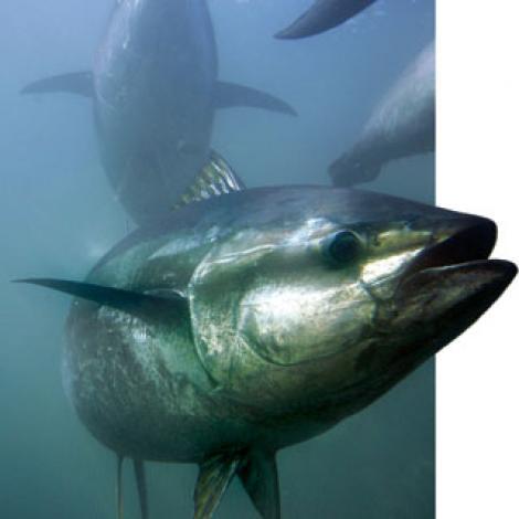 Homebrewing: la birra al tonno, acciuga e pesce spada!