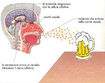 A lezione con l'ONAB: i difetti della birra – parte 2. La Ruota dell'aroma