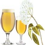 Birra ai fiori di sambuco: ricetta per gli homebrewers!