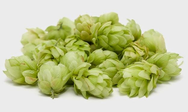 luppolo-birra