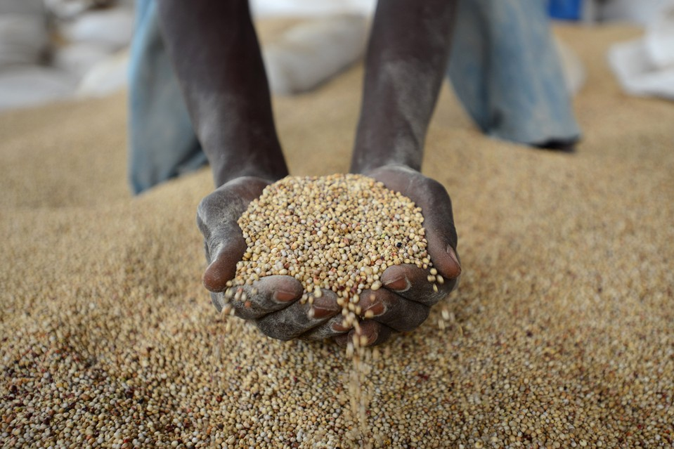 Sorgo: dall'ikigage ruandese alle birre senza glutine, una materia prima preziosa della birra