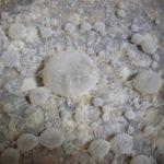 LAMBIC: il ciclo di fermentazione – Parte 13