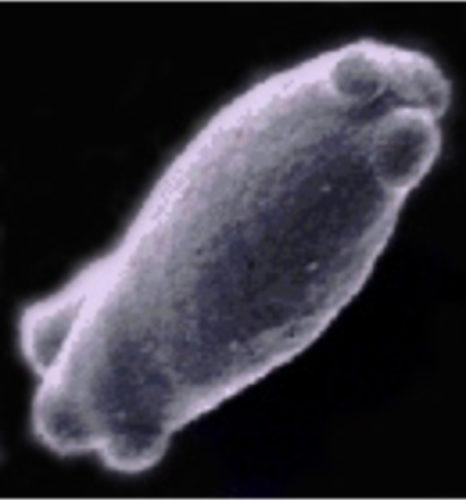 brettanomyces-yeast
