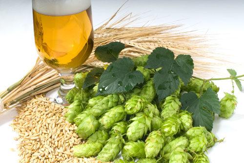 luppoli-birra-e-grani