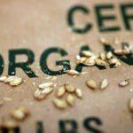 Birra biologica: un focus tecnico