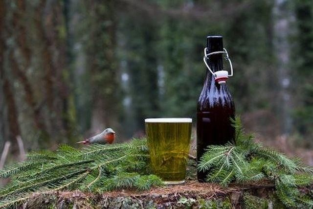 American Spruce Beer: da Oltreoceano all'homebrewing
