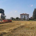 Impazza l'estate: al via la trebbiatura degli Orzi da birra italiani