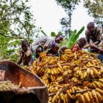 Banana & Banane: tutte le sfaccettature della tradizione africana