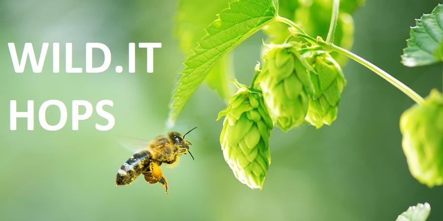 WILD.IT HOPS Al via il Fundraising per la selezione di Luppolo autoctono italiano: sostieni il progetto per ricevere in esclusiva le piante!