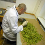 Il controllo di qualità nella birra: i parametri fondamentali da monitorare