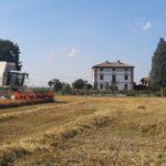 La trebbiatura dell'Orzo da Birra 2019: una grande annata per il Birrificio contadino Cascina Motta!