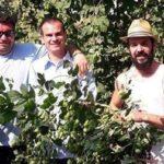 Luppolo italiano: è tempo di raccogliere i coni! L'esperienza Bio del Birrificio contadino Cascina Motta