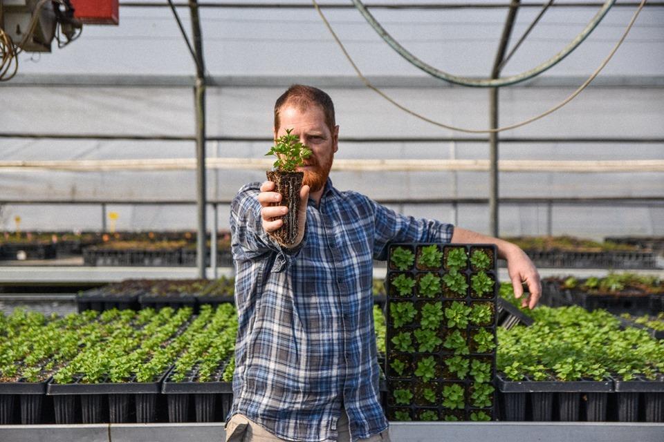 Mr Hops: eccellenza vivaistica italiana nella produzione di piantine di luppolo!