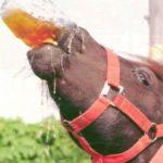 """""""A tutta birra"""": origini di un detto... misterioso!"""