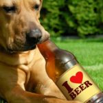 """""""Birra"""" per cani & gatti: conosciamola meglio!"""