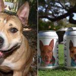 Ritrova il suo cane smarrito da due anni grazie a una lattina di birra