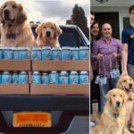 Coronavirus: i cani consegnano la birra a domicilio!