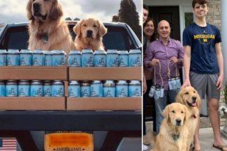 Busch Dog Brew: in USA – e non solo – spopola la birra per cani