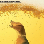 Asahi sospende i test sugli animali!