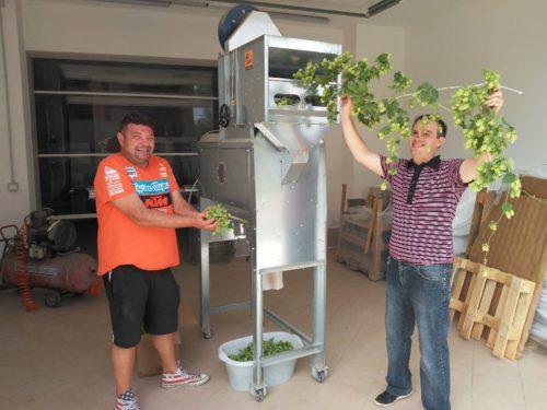#raccolto2020: ecco il luppolo di Cascina Motta per la birra contadina 100% italiana!