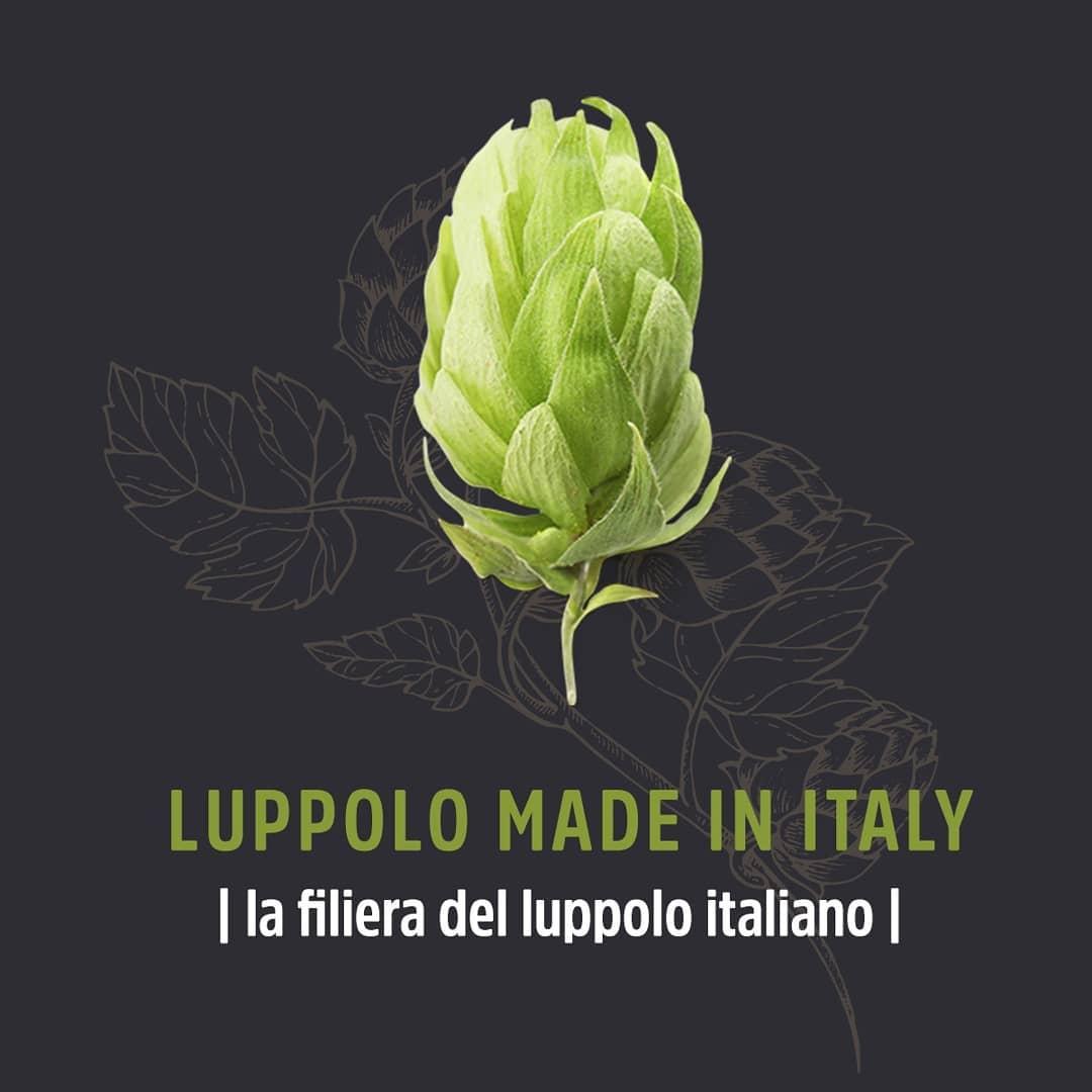 Dall'Umbria una grande sfida per produrre luppolo Made in Italy