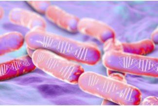 Rilevamento spoiler di birra in PCR: come funziona la tecnologia?