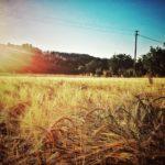 """Birra """"Il Mastio"""": un sorso di terra maceratese"""